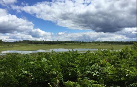 Qdoba: helping or harming the environment?